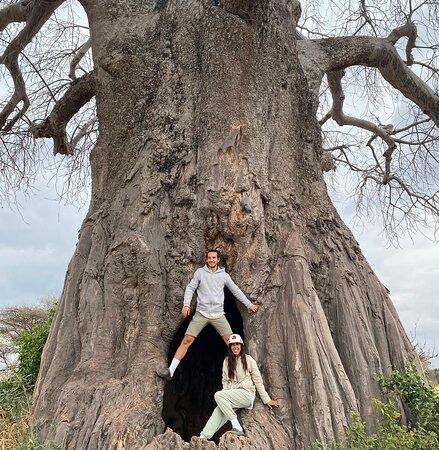 Tarangire National park Tanzania home Baobab trees