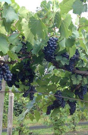 Three vineyard locations for estate grown wines