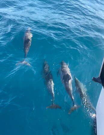 LUCKY LADY - Deluxe Na Pali Sunset Snorkel Cruise: The pod of dolphins that swam with our boat