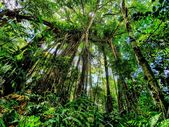 Rainforest Canopy Corcovado National Park