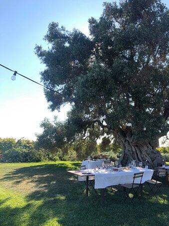תמונה מVineyard Tour and Wine Tasting in Lagoa