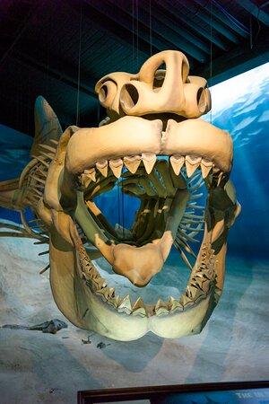 Marine Museum Exhibit