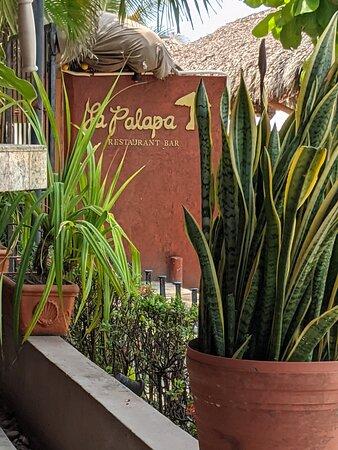 A nice West African Dracaena trifasciata plant on the wall in Si Señor Beach Restaurant.
