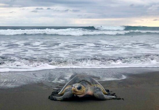 Tortuguero, Costa Rica: Come and enjoy the turtle season July to October