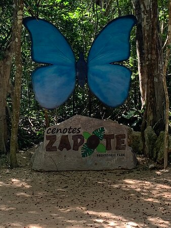 Toegangsbewijs voor Cenotes Zapote EcoPark: Blue butterflies are everywhere ... mascot of the park.