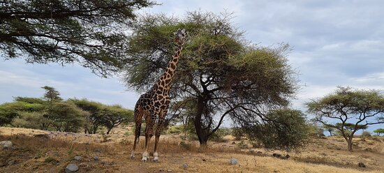 Most beautiful giraffe ever