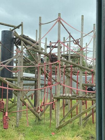 One of the spacious Orangutan enclosures