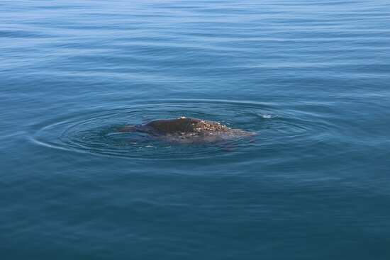Turtle at surface