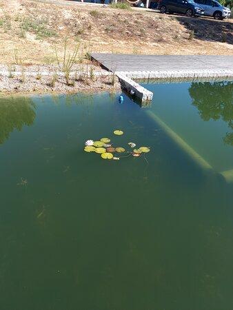 Área orgânica da piscina