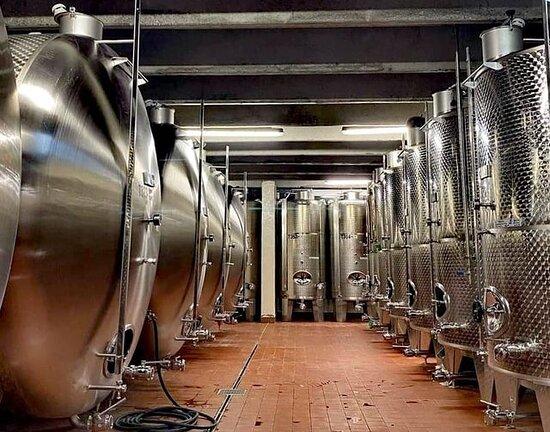 Non solo legno. L'acciaio: dove il vino fermenta, affina e si stabilizza.