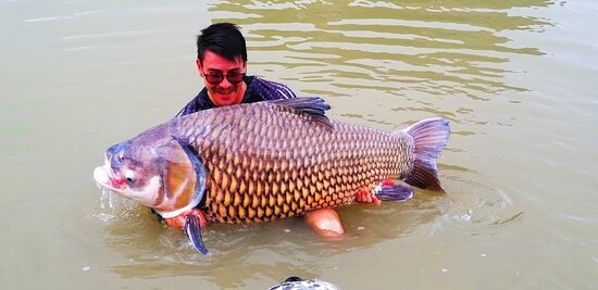 Angeln im Jurassic Fishing Park: The 150lb fish caught.
