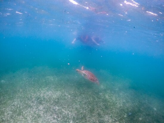 Swimming with the turtles--Late August to September is when the turtles are there!