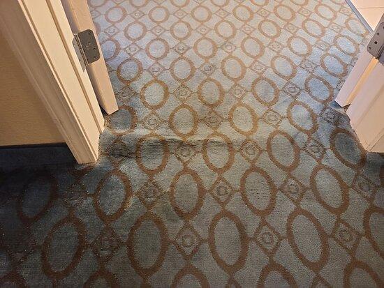 Wrinkled, buckled carpet trip hazard