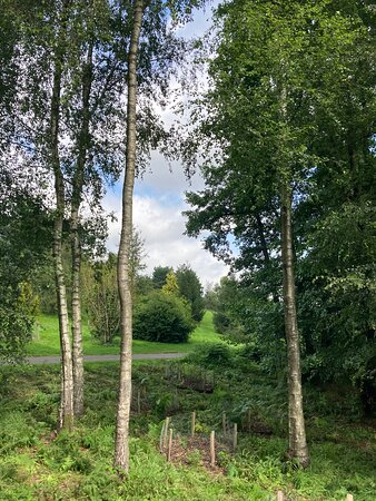 4.  Bedgebury National Pinetum and Forest, Goudhurst, Kent
