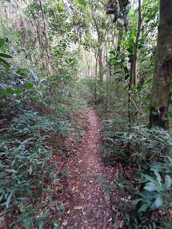 Imagem de parte da trilha em mata fechada que leva ao topo do Pico do Lobo.