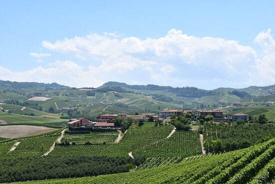 Some of the Vineyards