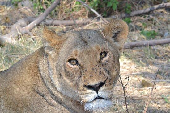 Moremi Game Reserve, Botswana: let us host your holidays in Botswana   email us on  letsatsisafaris@gmail.com