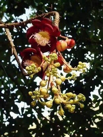 Huizhou Flower Island