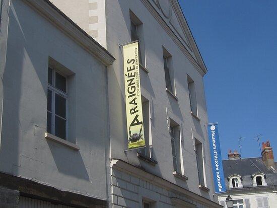 Café Brasserie Bar du Vieux Château. Vue 10. Au 6 Rue du Président Merville. Et, Au 3 Rue du Président Merville, Le MUSEUM D'HISTOIRE NATURELLE. Il est Juste, à Côté ! Août 2021. TOURS.