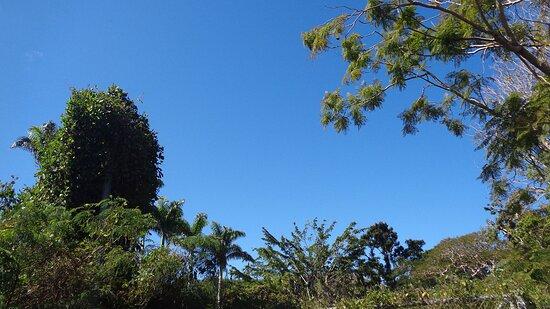 Noumea, New Caledonia:  ╭🍂🔸    ℂ𝕀𝕋𝕐 ℙ𝕃𝔸ℕ𝕋 ℕ𝕌ℝ𝕊𝔼ℝ𝕐    ┬┬ 7EME KM Suburb 🔸🍂 ╮⚇ ⚇ ▪ ▫ Nouméa City