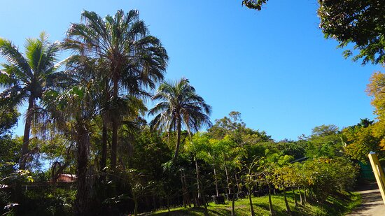 Noumea, Neukaledonien: ╭🌿🔸    ℂ𝕀𝕋𝕐 ℙ𝕃𝔸ℕ𝕋 ℕ𝕌ℝ𝕊𝔼ℝ𝕐   ┬┬ 7EME KM Suburb 🔸🌿 ╮⚇ ⚇ ▪ ▫ Nouméa City