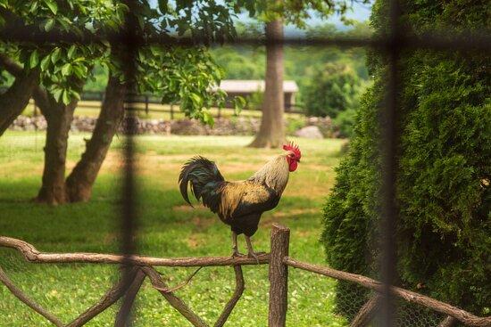 Bilder von Glen Gordon Manor – Fotos von Huntly - Tripadvisor