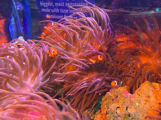 Sealife centre visit 6th of August 2021. Birthday treat to me