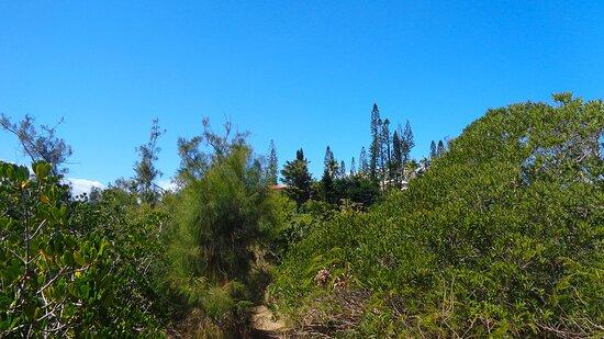 Noumea, Nueva Caledonia:  ╭🍂🔹  Ouemo Swamp  🔹🍂 ╮ ▫ ◈  Nouméa City 🌴⚇  ST Marie Bay - New Caledonia  ⚆🌴⚇