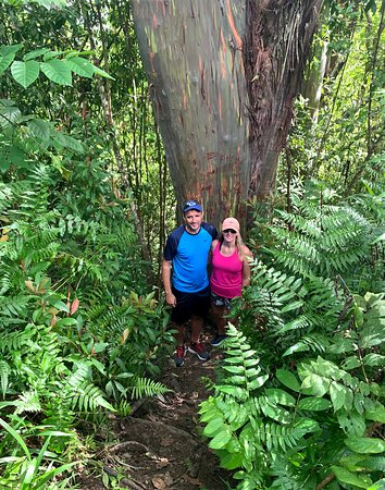 Half Day - Half way to Hana: tree