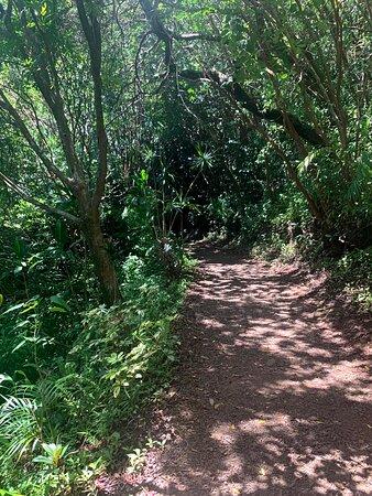 Half Day - Half way to Hana: Garden of Eden