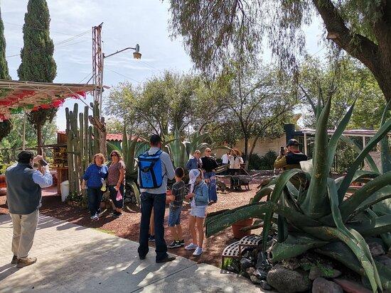 Full Day Tour of Teotihuacán and Basilica of Guadalupe: Hola, un grupo muy divertido y de todo el mundo.