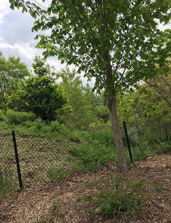 Omaha, NE: cheatah cage