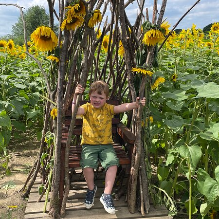 Great time at the PYO Sunflowers.  Will definitely go again. Lovely friendly staff and incredible sunflowers.