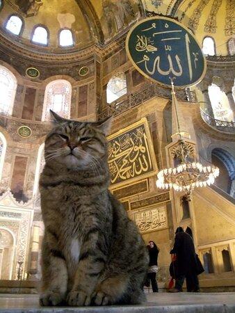 Hagia Sophia and Peace