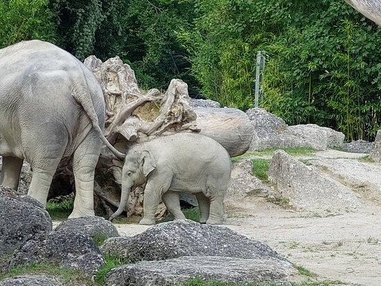 Babyelefant und Mama