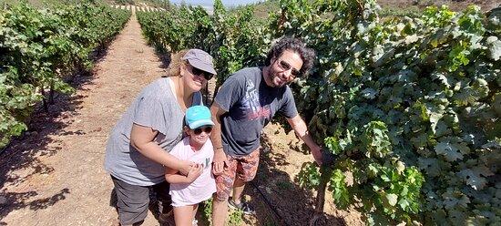 Découvrir Israel en francais avec son guide touristique David Mansour
