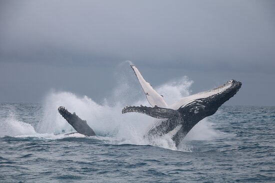 Hervey Bay Whale Watching Experience: More WOW!