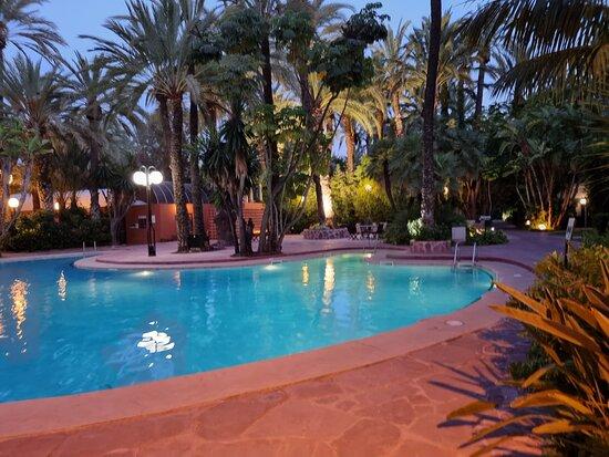Au bord de la piscine encerclée de magnifiques palmiers