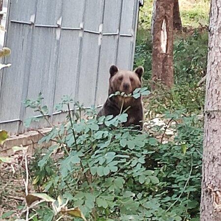 Siamo stati a mangiare in questo posto dopo aver visitato l'area faunistica dell'orso a Palena.