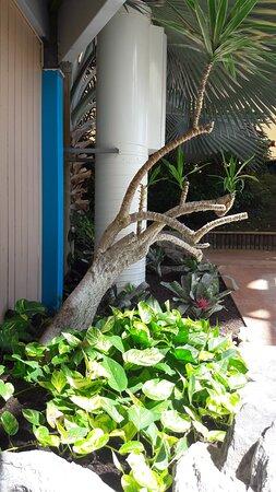 plantes avant les douches