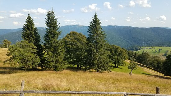 View of the Black Forest from the summit.