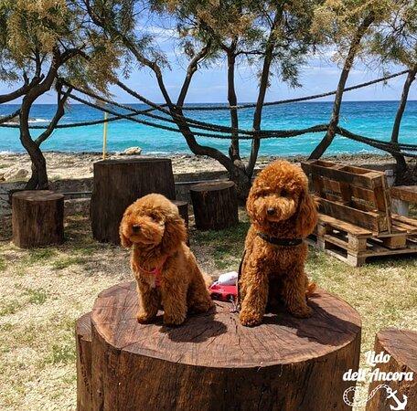 Lido Dell'ancora è Pet friendly!♥️ I nostri amici a 4 zampe nella nostra area relax 🌊