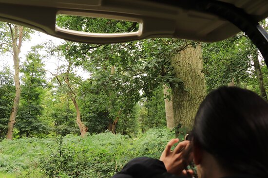Our first safari in Norfolk and hopefully not the last!