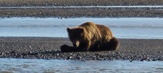 bear cub napping