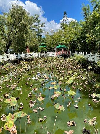 Full of lotus
