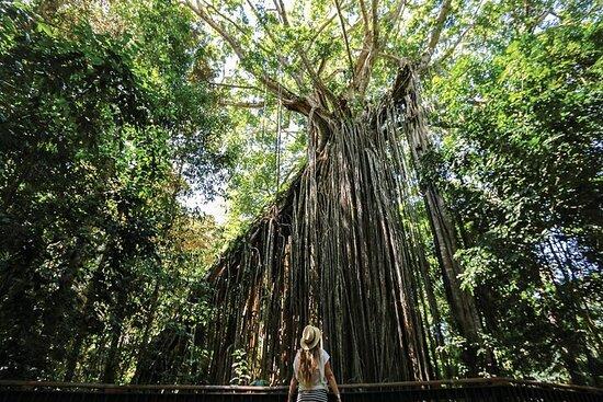 Visite du patrimoine et de la forêt tropicale de Yungaburra - Prise...