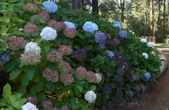 Our grounds are filled with cultured and native gardens.