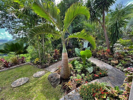 The stone paths and gardens between the Infinity Studio and Palm Cottage