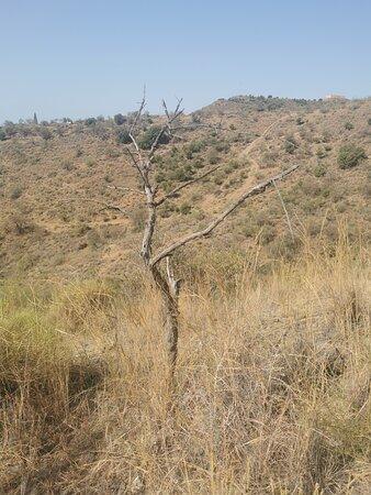 Un árbol seco en el monte.