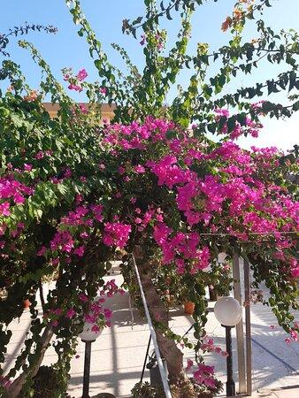 Kokkini Hani, Grecia: ✌✌Good night!.✌✌ (the summer of 2021)